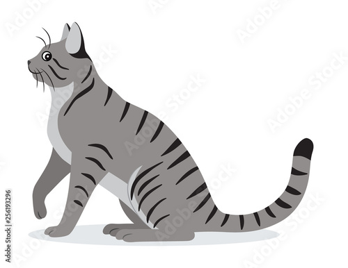 Fotografía Smooth coated tabby cat with long tail icon, cute gray pet, domestic animal, vec
