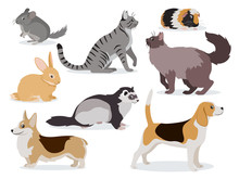 Pets Icon Set, Cute Gray Chinchilla, Fluffy Ferret, Smooth Coated And Domestic Long-haired Cats, Corgi, Beagle, Dogs, Rabbit, Guinea Pig Isolated, Vector Illustration