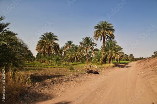 Garden Poster Natural Park Kerma, Sudan, Nubia