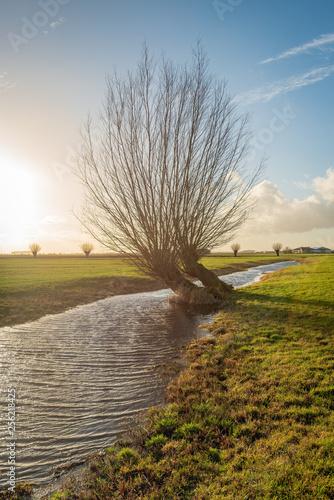 Fotografie, Obraz  Backlight photo of pollard willow in a polder landscape