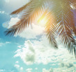 Summer palm trees against blue sky clouds and sun background, happy holiday and tropical resort concept