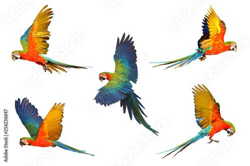 Foto auf Leinwand Vogel Set of macaw parrot isolated on white background