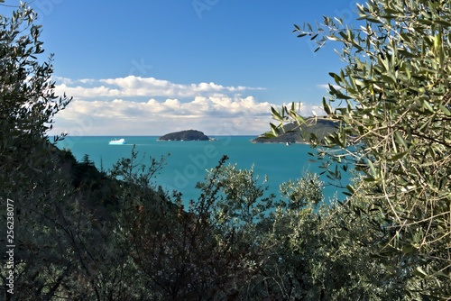 Cuadros en Lienzo Olive grove and garden with sea view.