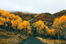 Fall Colors Of Aspen Trees In ...