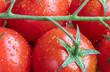 Cherry Tomato. Fresh. Vegetables. Drops. Macro. Wooden