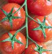 Cherry Tomato. Fresh. Vegetables. Drops. Wooden. Macro