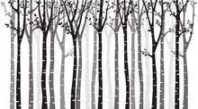 Birch Tree Wood Silhouette On ...