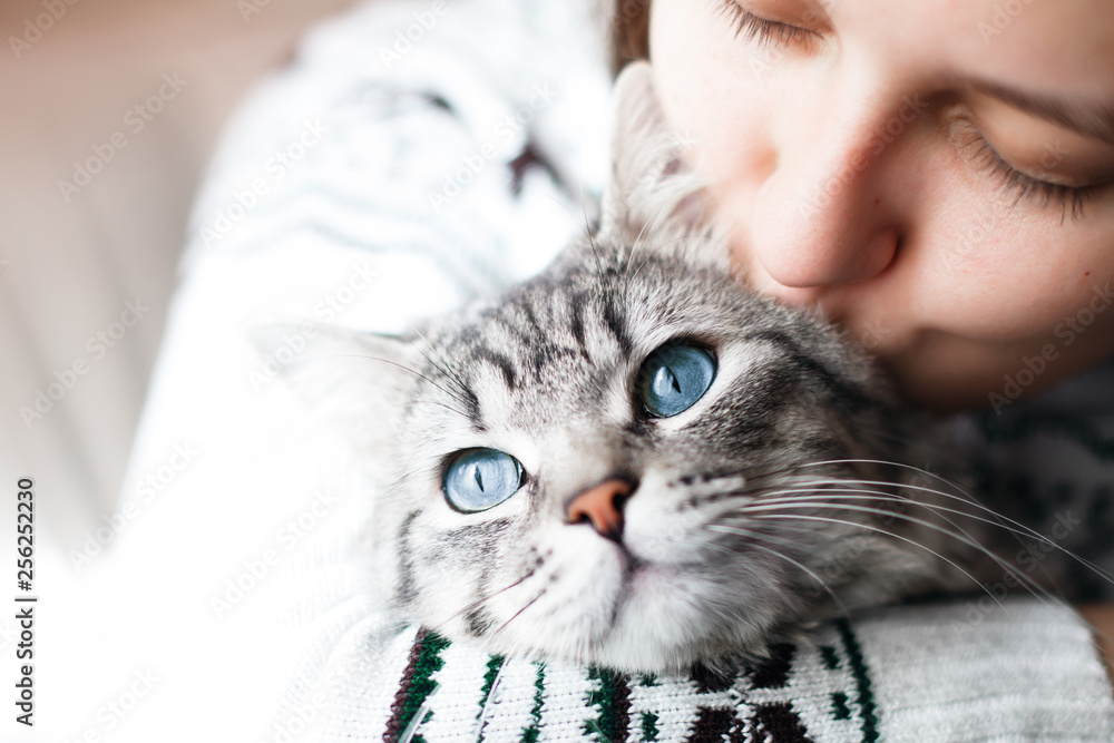 Fototapeta Woman at home holding her lovely fluffy cat. Gray tabby cute kitten with blue eyes. Pets, friendship, trust, love, and lifestyle concept. Friend of human. Animal lover.