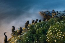 High Angle View Of Cormorants Perching On Rock Formation