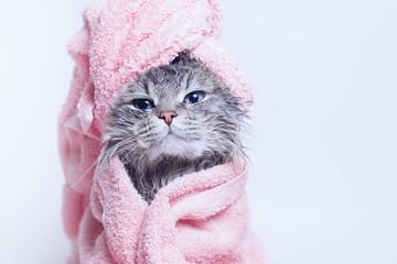Smiješno smiješno mokro sivo ljupko mače nakon kupanja umotano u ružičasti ručnik s plavim očima. Kućni ljubimci i koncept životnog stila. Upravo oprana ljupka pahuljasta mačka s ručnikom oko glave na sivoj pozadini.