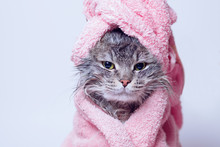 Funny Wet Sad Gray Tabby Cute Kitten After Bath Wrapped In Pink Towel With Yellow Eyes. Pets Concept. Just Washed Lovely Fluffy Cat With Towel Around His Head On Grey Background.
