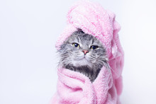 Funny Smiling Wet Gray Tabby C...