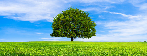Green summer landscape scenic view wallpaper. Beautiful wallpaper. Solitary tree on grassy hill and blue sky with clouds. Lonely tree springtime. Green planet earth. Photo stock.