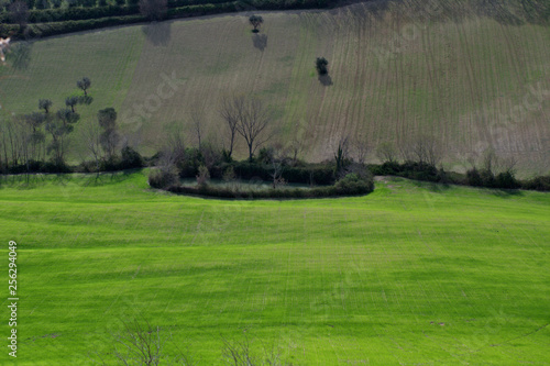 Keuken foto achterwand Khaki green field,landscape, grass,rural,countryside, tree,view,agriculture,