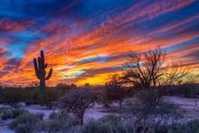 Desert Landscape With Saguaro Cactus (Saguaro) At Sunset, Saguaro National Park, Arizona, USA, North America