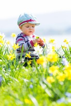 Toddler, 10 Months, Sitting In Flower Meadow With Daffodils, Germany, Europe