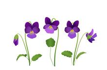 Sammlung Von Veilchen Blumen, ...