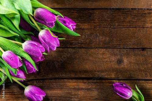 Piękni purpurowi tulipany na ciemnym nieociosanym tle