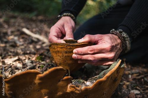 Valokuva  closeup of hands holding fomes fomentarius tinder fungus