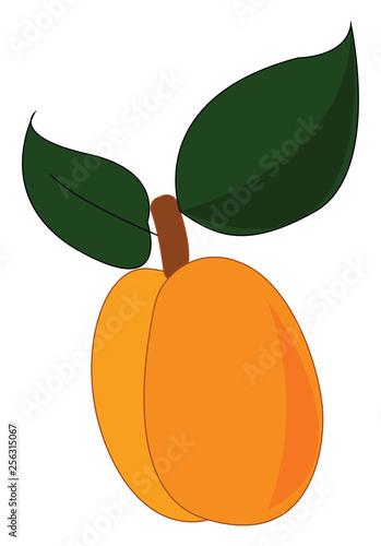 Fotografie, Obraz  Sliced apricot, vector color illustration.