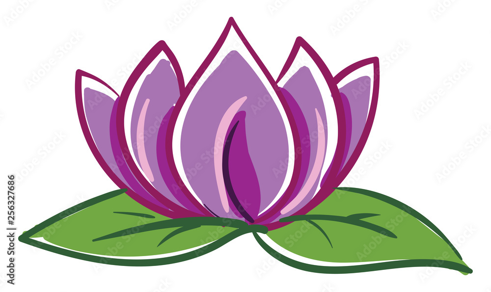 Pink and purple lotus with two green leafes vector illustration on white background