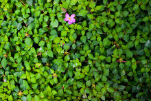 Small Green Plant Covered On The Ground And Pink Flower With Fade Of Light
