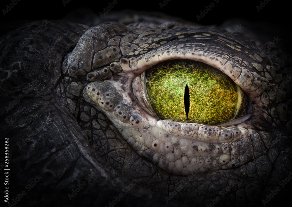 Fototapeta Scary eye of a crocodile. Green eye close up.