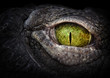 canvas print picture - Scary eye of a crocodile. Green eye close up.
