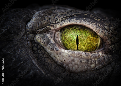 Fotomural Scary eye of a crocodile. Green eye close up.