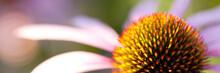 Beautiful Funny Bright Flower ...