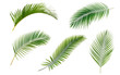 Leinwanddruck Bild Green palm leaves collection isolated on white background.