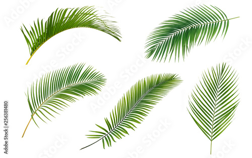 Foto auf Gartenposter Palms Green palm leaves collection isolated on white background.