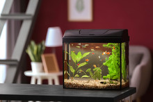 Beautiful Aquarium On Table In...