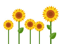 Blooming Sunflowers Vector Fla...