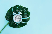 Blue Alarm Clock And Tropical Palm Leaf On Blue Background With Copy Space.