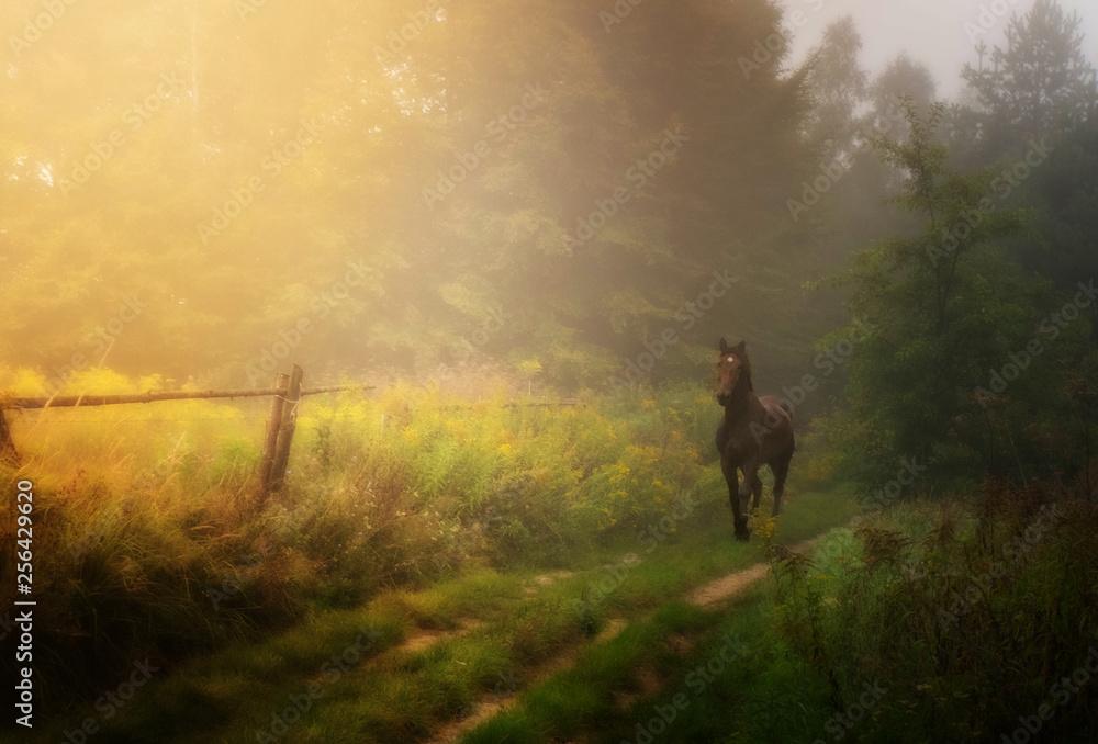 Fototapeta kary koń na ścieżce