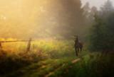 Fototapeta Zwierzęta - kary koń na ścieżce