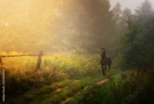 Fototapeta kary koń na ścieżce obraz