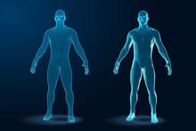 Temlate Set Of Human Body 3D Polygonal Wireframe Blueprint. Vector Illustration