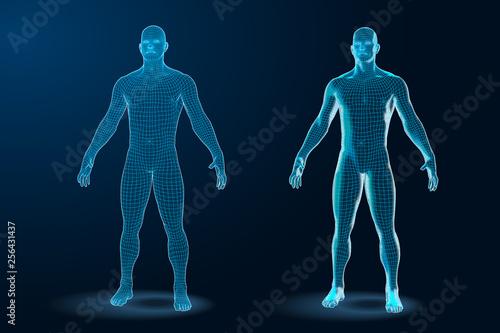 Fotografia  Temlate set of Human Body 3D Polygonal Wireframe Blueprint