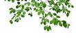 canvas print picture - Green leaves and branches isolated on white