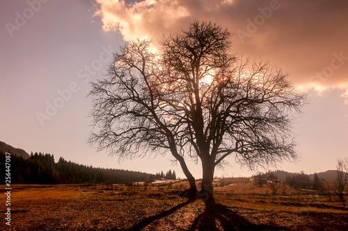 Garden Poster Brown magical sunrise with tree.savsat/artvin/turkey