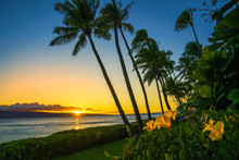 Sunset In Hawaii With Yellow Flowers