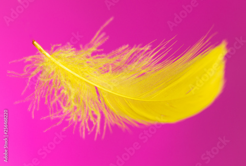 Yellow feather isolated on pink background - 256468220
