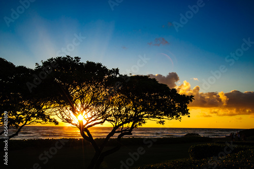 Beautiful Tropical silhouetted orange trees