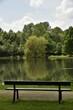 Banc en face de l'arbre au feuillage clair miroitant dans l'étang principal du domaine provincial de Vrijbroekpark à Malines