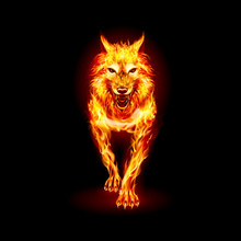 Aggressive Fire Woolf. Concept Image Of A Red Wolf And Flame On A Black