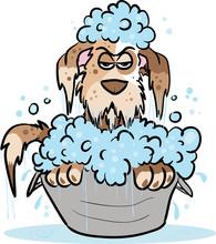 Dog Hates Bathing