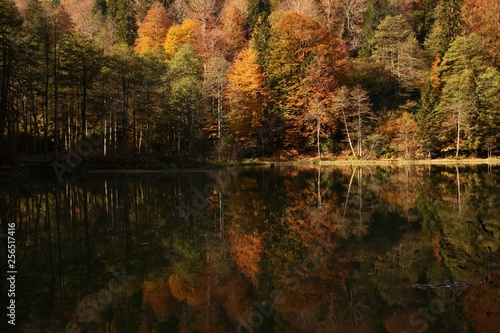 Landscape in the forest with a lake.savsat/artvin/turkey