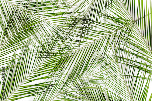 Ingelijste posters Tropische Bladeren Tropical green palm leaves on white background. Flat lay, top view